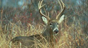 Delaware approves expanded Sunday deer hunting