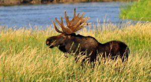 Feds expand hunting in 30 national wildlife refuges